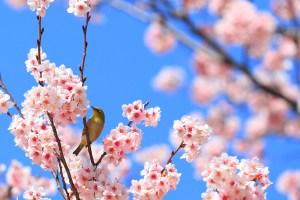 二十四節気・節句を知って「春」を楽しむ