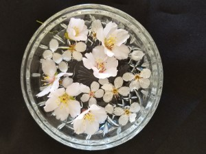 Awakening Abundance - a crystal bowl filled with water, blossoms on top