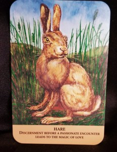 Hare - A brown rabbit sitting in a grassy field