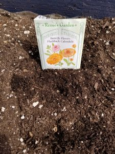 The Witches Garden - planting calendula in depressions