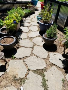 Pulling Weeds from Our Path - garden path with weeds between the stones