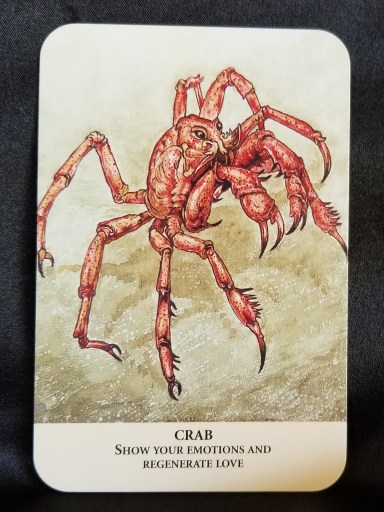 Crab Oracle Card - A red crab with its pincers raised