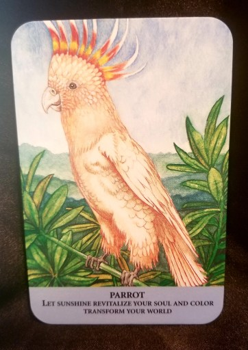 Parrot - Oracle Card:  A large yellow parrot sitting on a branch, the feathers on its head standing straight up.