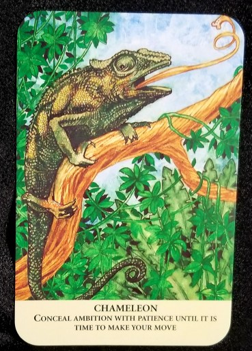 Chameleon - A large chameleon, its tongue flicking outward, sitting on a tree branch.