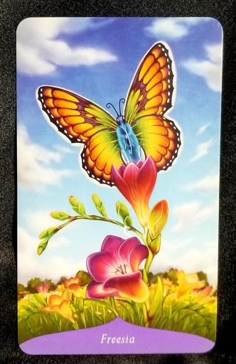 Freesia Oracle Card - A beautiful orange butterly sitting atop a Freesia blossom.