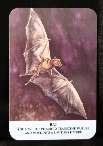 Bat - Oracle Card: A grey bat in flight