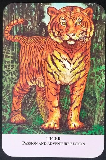 Tiger - A large female tiger standing in tall grass