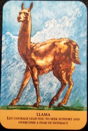 Weekly Oracle Reading - Llama