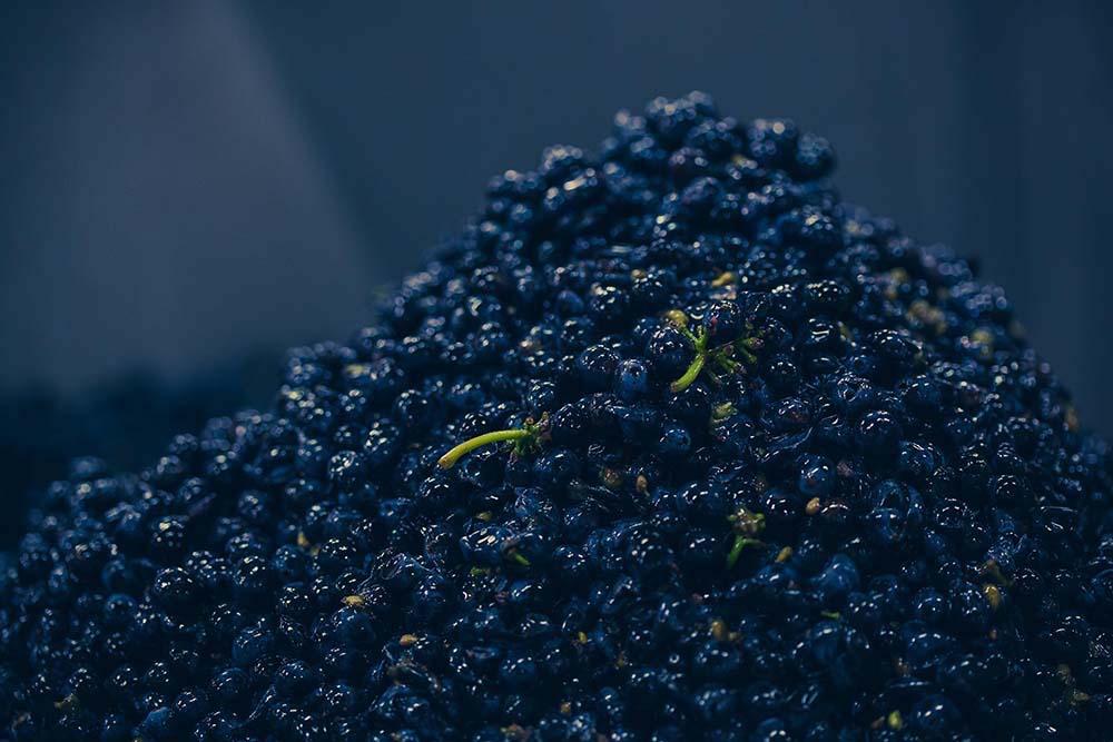Raisin Égrappage vendanges 2015 domaine Boisset Clos de la Vougeraie - Photo de Bénédicte Manière - Photographie de vin et domaines