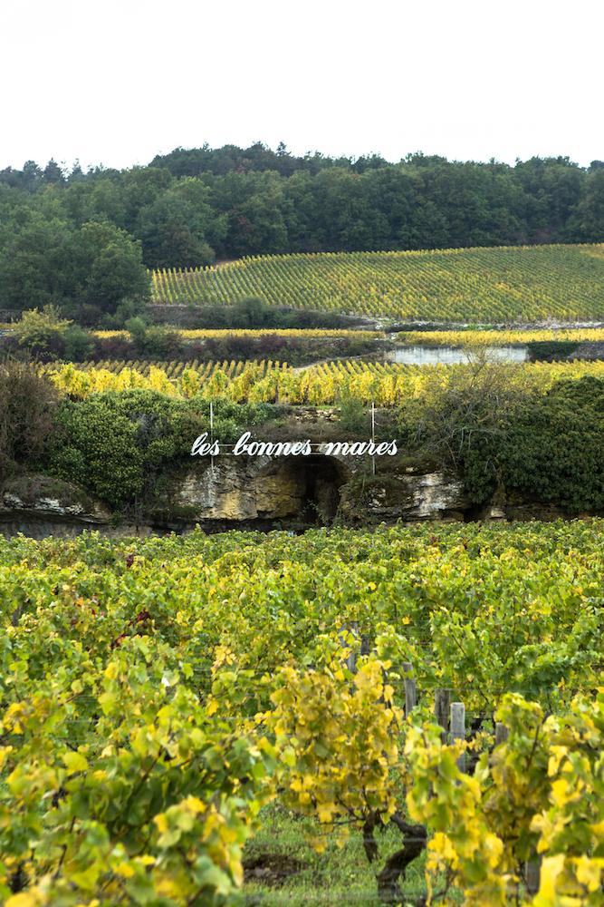 bonnes mares bourgogne vignes mores saint denis - Photo de benedicte manière - Photographie de vin et domaines