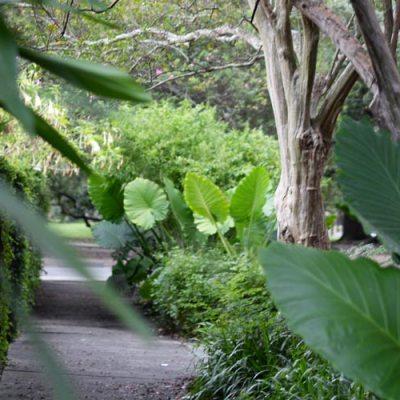 lower-garden-distict-new-orleans