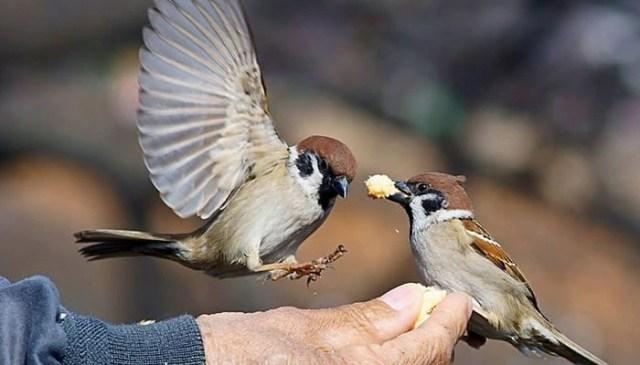 জাপানের দম্পতির সন্তান চড়ুই পাখি ...