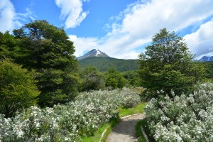Walking in Patagonia – Tierra del Fuego