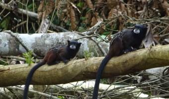 Strange bat-squirrel-devil monkeys