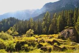 The meadows around Lake Obernberg