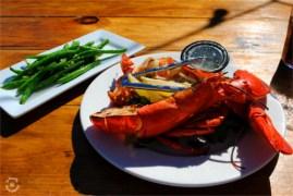 Lobster in Newport