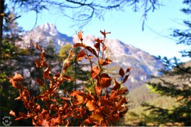Autumn Colors Scharnitz