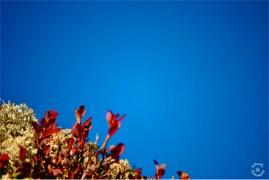 Autumn Colors in Sellrain