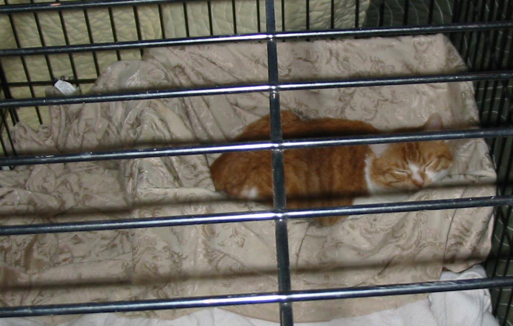 """""""CAT"""" in his bedroom"""