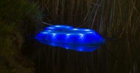 turtle_lit_blue_02