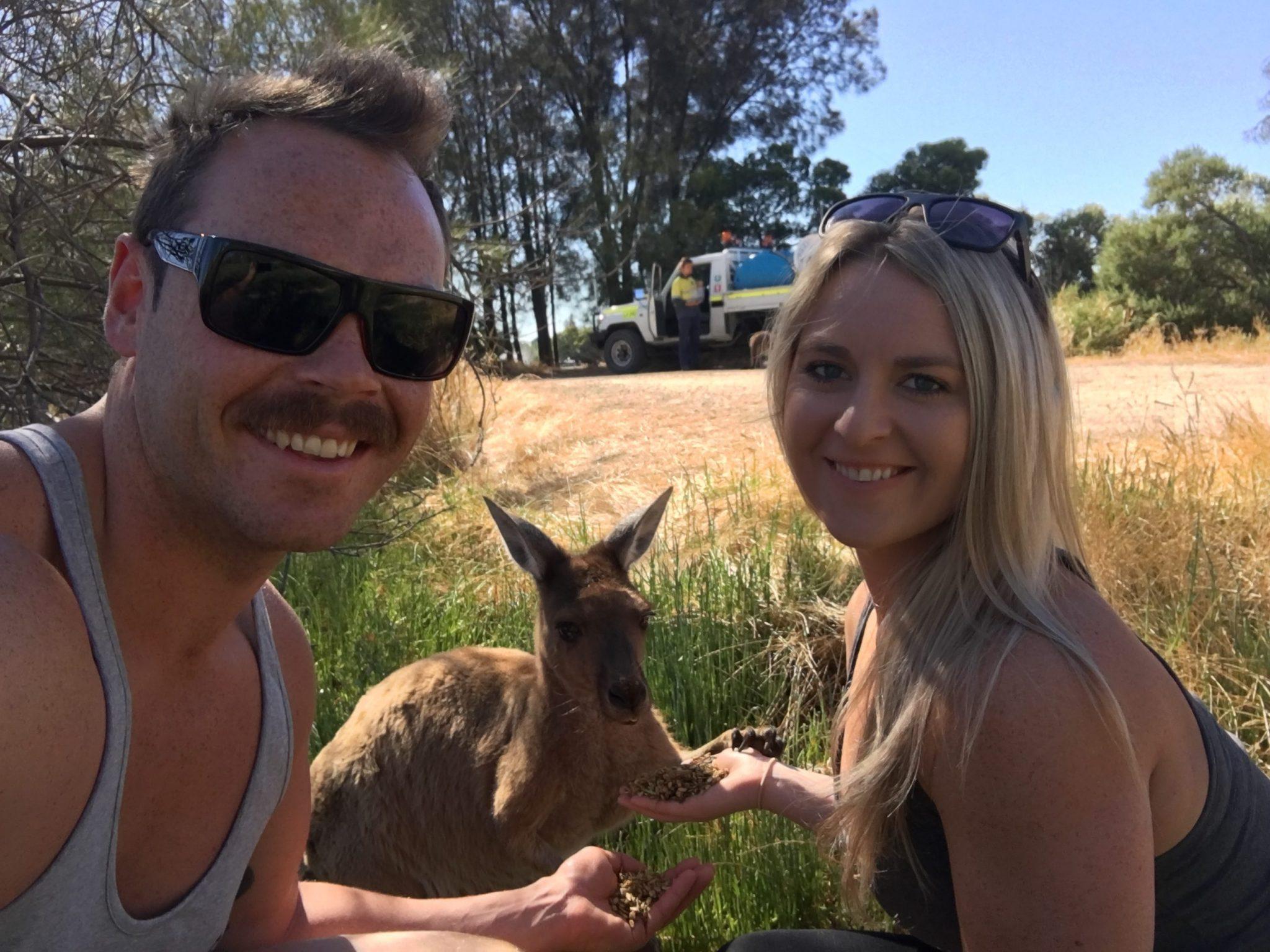 kangaroo in Perth