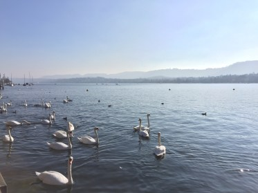 There were so many swans.