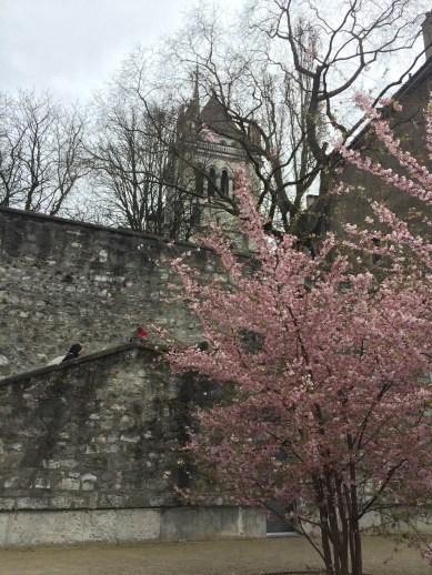 Heading up to the Cathedral. The trees are beginning to bloom.