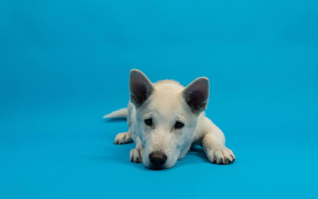 Spelletjes en tips om je hond binnen bezig te houden