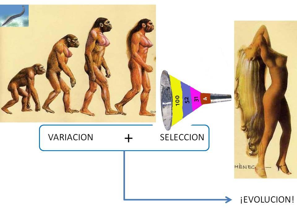 Evolución= variación + selección