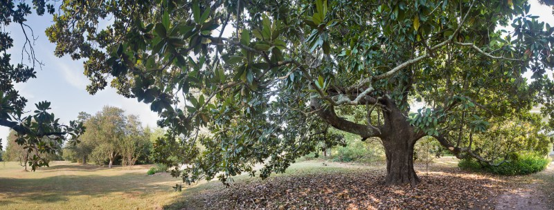 Harrison County, Locust Grove Plantation, Magnolia
