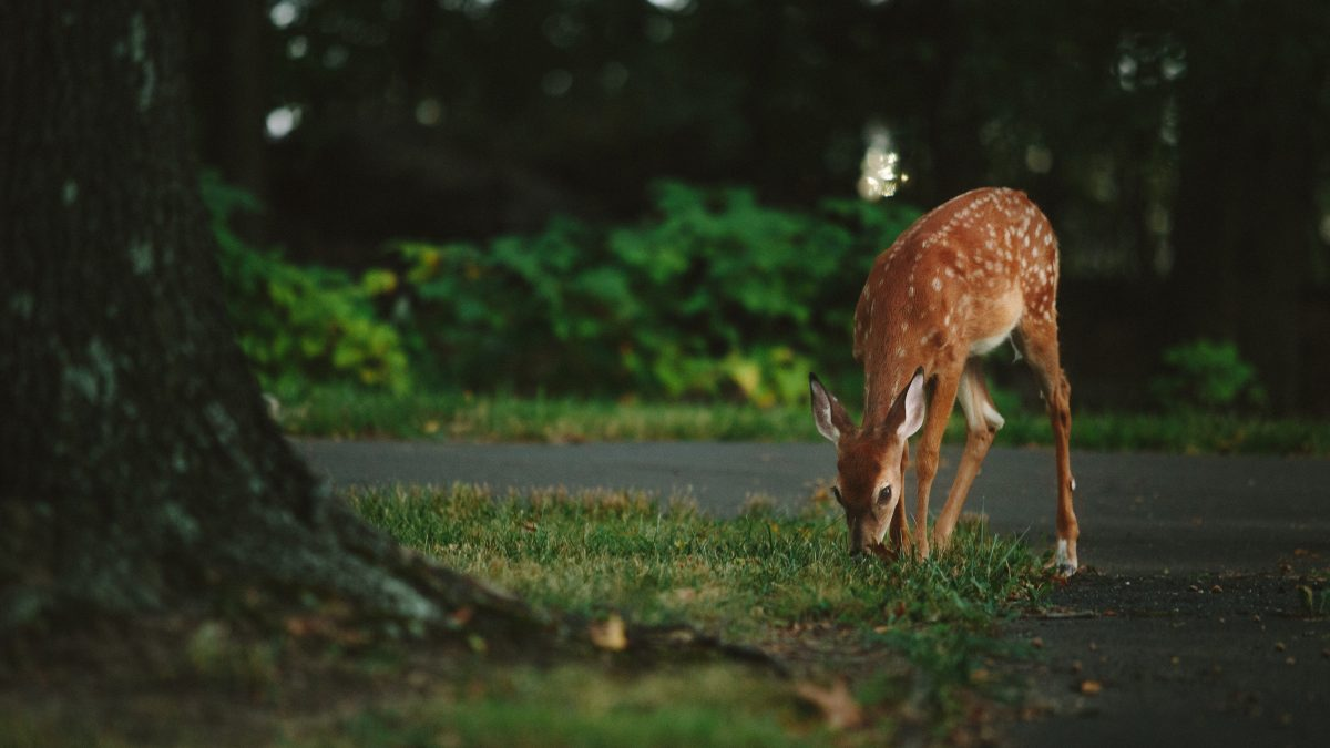 Deer Resistant Plants for Texas & the Hill Country — Homeowner Headaches