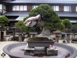 10 Pohon Bonsai Tertua Yang Menjadi Juara Dunia