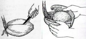 Teknik Dasar Membuat Bonsai Kelapa Super Mudah