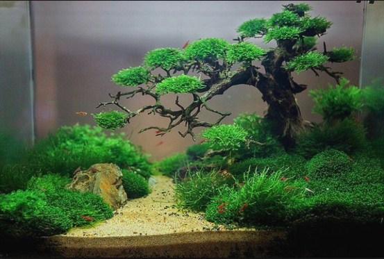 Driftwood: Cara Menanam & Merawat Pohon Bonsai Aquascape ...