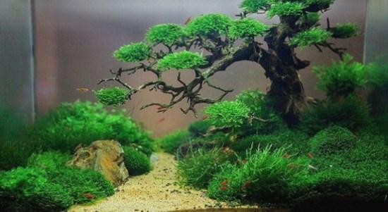 Driftwood: Cara Menanam & Merawat Pohon Bonsai Aquascape