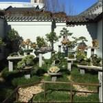 Lokasi Bonsai: Menempatkan Pohon Bonsai Anda Pada Tempat Yang Tepat