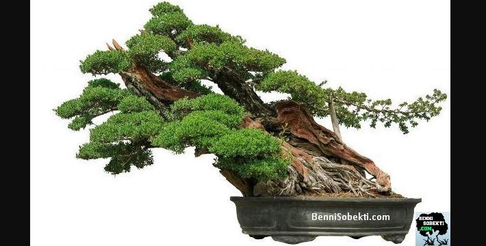 Cara Membentuk Pohon Bonsai Yang Baik