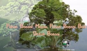 Pohon Bonsai: Macam Pohon Bonsai Baik Untuk Bonsai