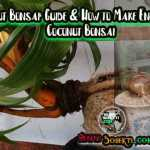 Coconut Bonsai: Guide & How to Make Enchanting Coconut Bonsai
