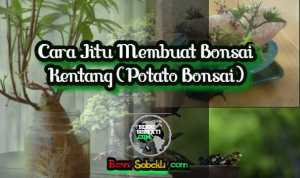 Cara Jitu Membuat Bonsai Kentang (Potato Bonsai)