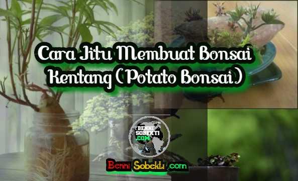 Cara Jitu Membuat Bonsai Kentang (Potato Bonsai)