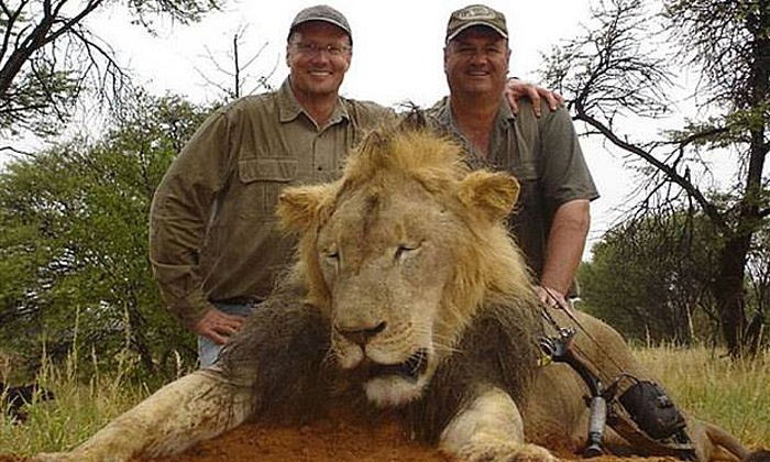 Americans Care More About Dead Lions than Dead Humans