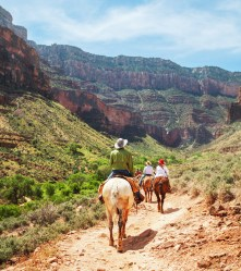 Hikers explore the Grand Canyon on horseback.