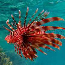 redFish_512
