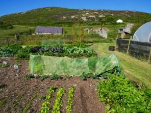 Of of Mum's veg plots