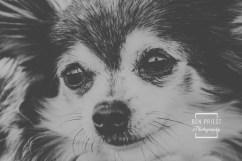 millie-the-dog-photographs-034