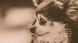 millie-the-dog-photographs-085