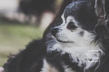 millie-the-dog-photographs-107