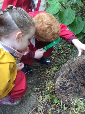 Forest School Experiences