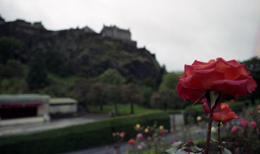 scotscan754_6250803279_l